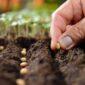 В Красноярском крае построят семеноводческий центр